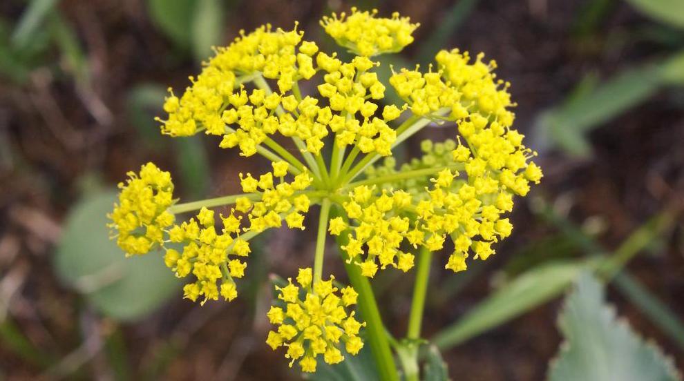 Популярные растения для дома фото неудачно выполнила