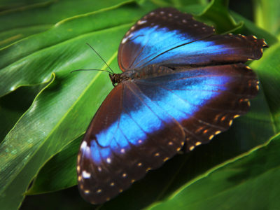 Blooms & Butterflies 2 - Franklin Park Conservatory