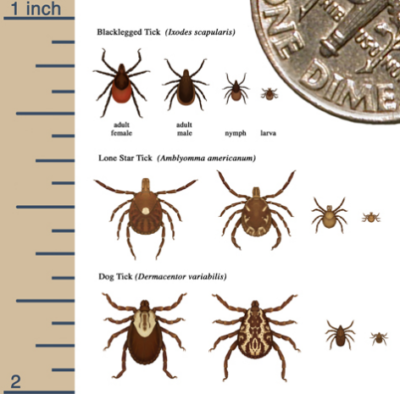 Ticks CDC