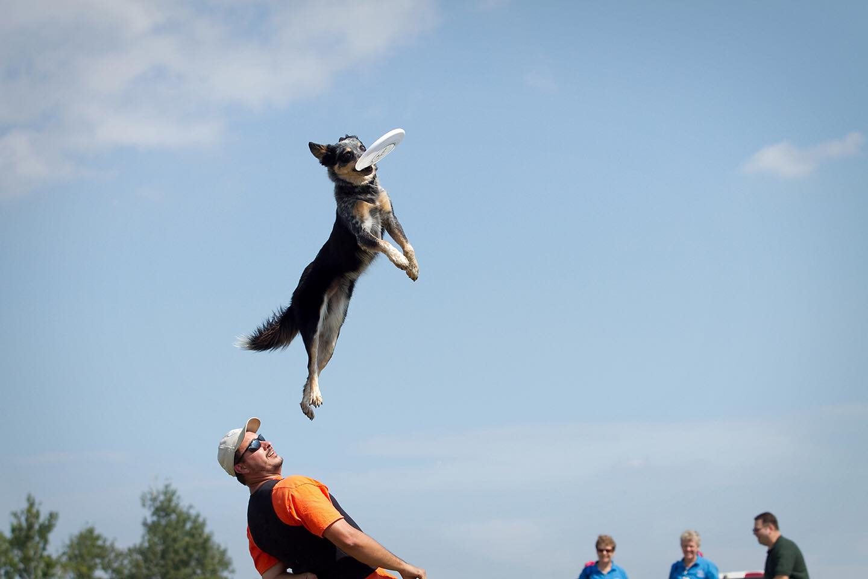 Enjoy dog days of summer at Hilliard's WAG! Fest – 614NOW