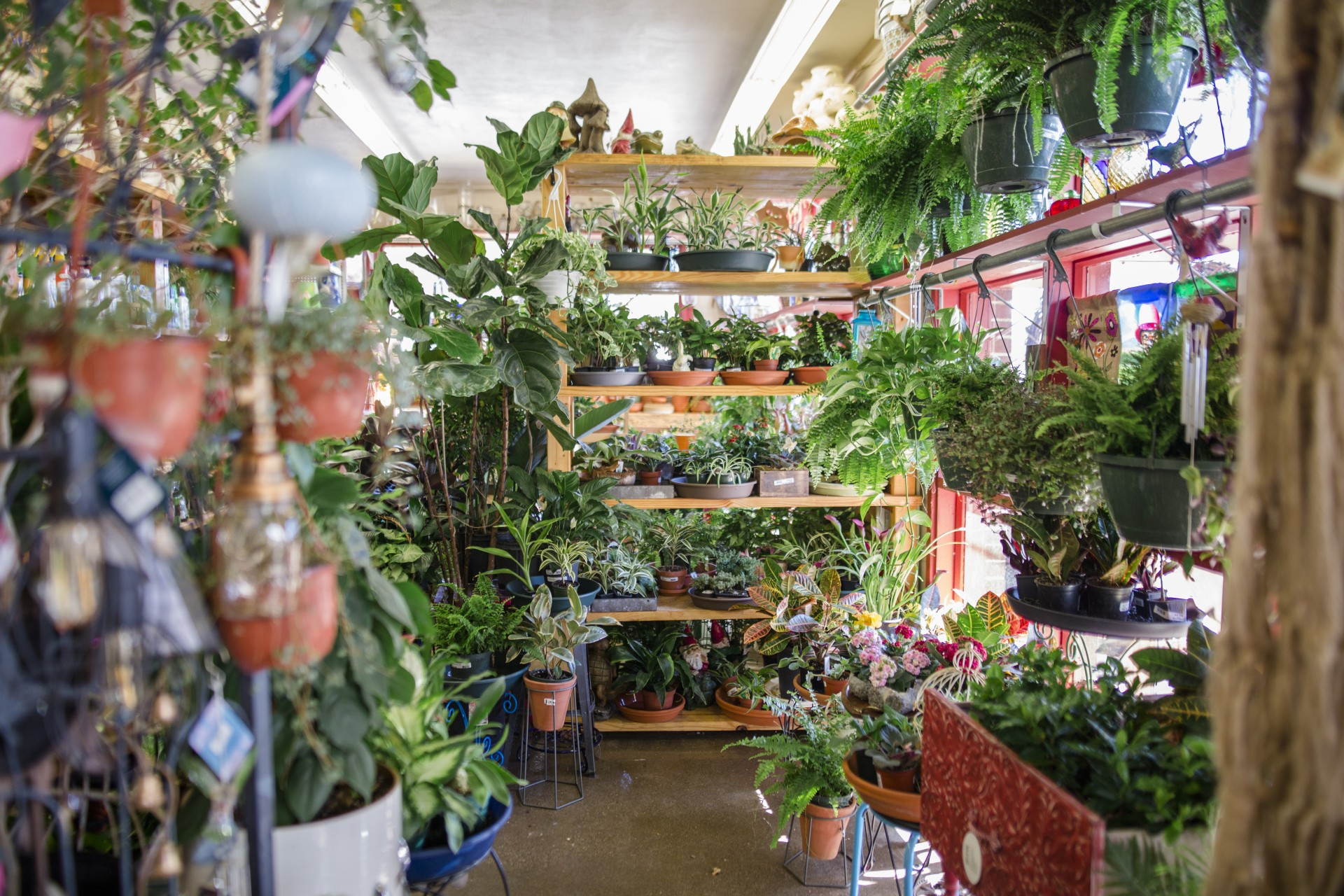 Easy Being Green 3 Places To Stock Up On Houseplants 614now