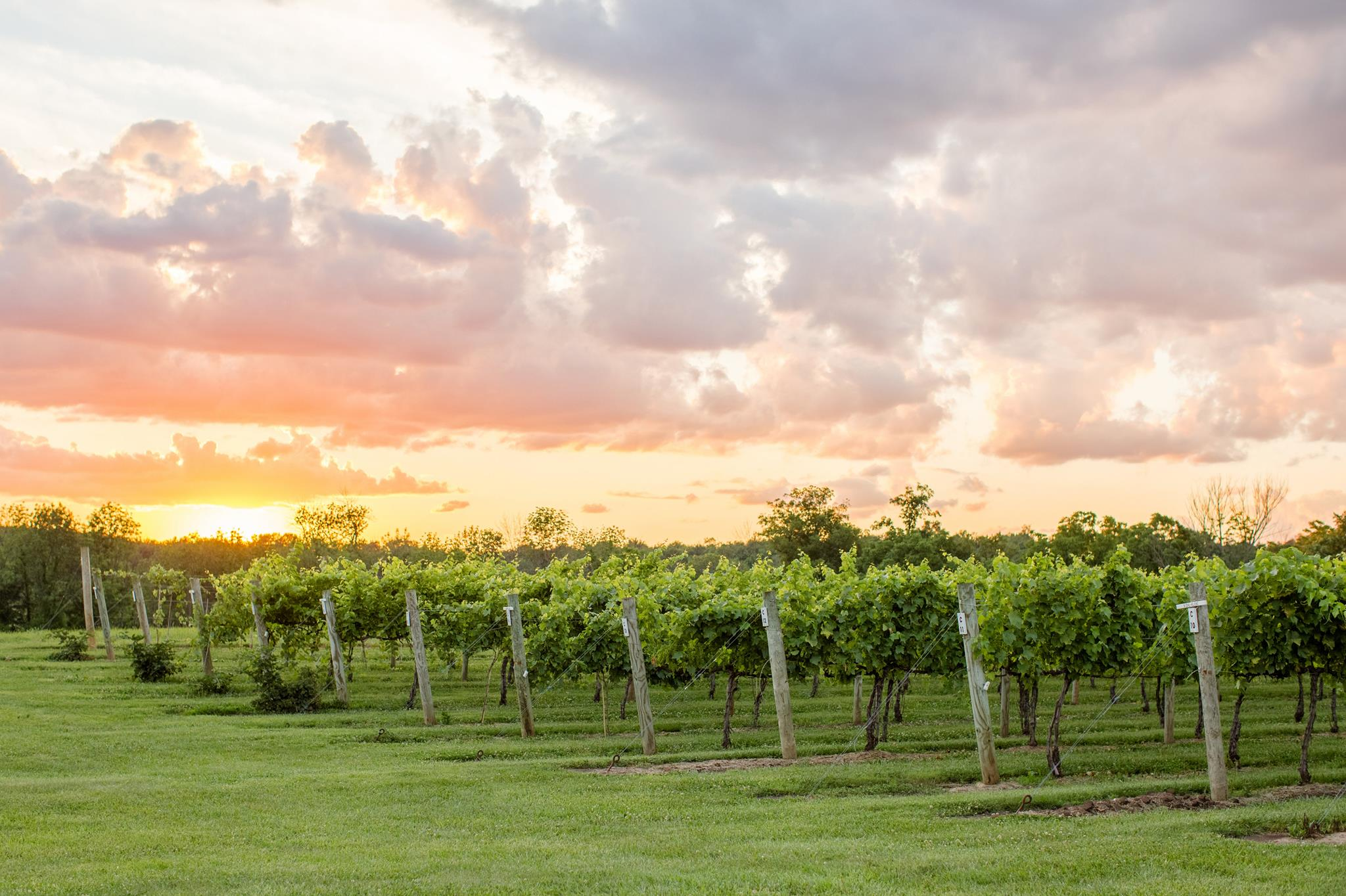 Road trip! Central Ohio wineries to launch new wine trail